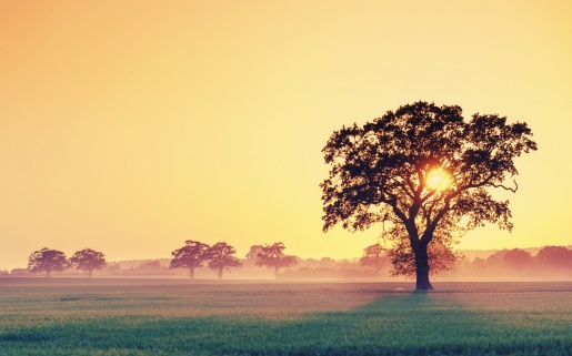 ws_Field_and_Tree_at_Sunset_1440x900